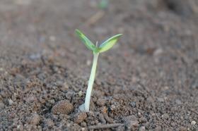 plant-259806_1920